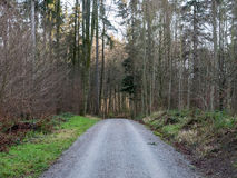 Road going through a forest in Switzerland. A road going through a forest in Switzerland with trees on either side Royalty Free Stock Image