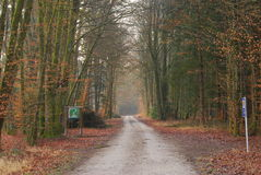Road going through the forest in winter. A maintenance road in the forest is flanked by trees in winter Stock Images