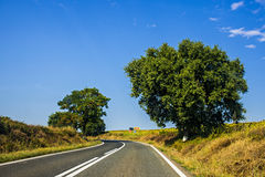 Road. Going through Romania country Royalty Free Stock Photography