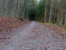 Road going through a thick forest. A road going through a forest in Switzerland Royalty Free Stock Photos