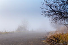 Road going in to the fog Royalty Free Stock Photo