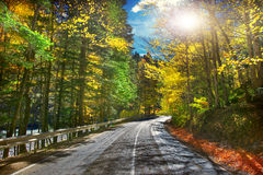Road in golden autumn forest. Royalty Free Stock Photo