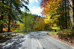 Road in golden autumn forest. Stock Image