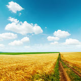 Road in golden field with harvest under blue sky Stock Images