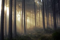 Road through a golden forest with fog and warm light Stock Photo