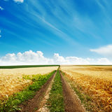 Road in golden harvest Royalty Free Stock Images
