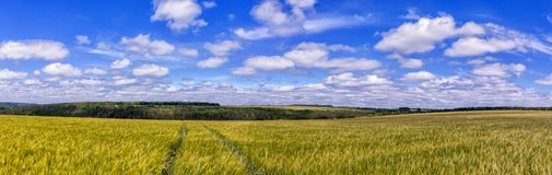 Road through Golden wheat field, perfect blue sky. majestic rural landscape royalty free stock photos