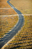 Road in vineyard Royalty Free Stock Photo