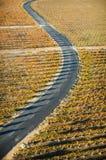Road in vineyard Royalty Free Stock Photo