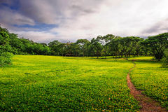 A path on the lawn_xishuangbanna_yunnan Stock Photos