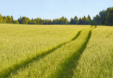 The road in the grass Royalty Free Stock Photo