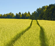 The road in the grass Royalty Free Stock Photography