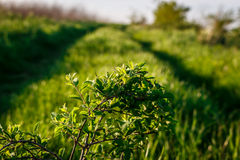 Road in the grass with small branch Stock Images
