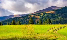 Road through grassy meadow on a forested hill. Lovely nature scenery under the cloudy sky Royalty Free Stock Image