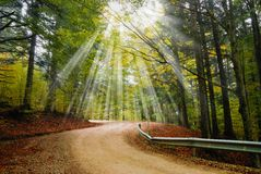 Road with gravel in the park. Road with gravel in the forest Stock Photos