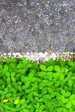 Grey stones path and bed of green plants. Geometry royalty free stock photo