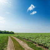 Road in green agricultural field under sun in blue sky. Road in green agricultural field under sun in deep blue sky Stock Photo