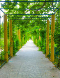 Road in the green. Alley all covered by green plants Stock Images