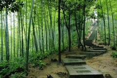 Road in Green Bamboo Forest Royalty Free Stock Photo