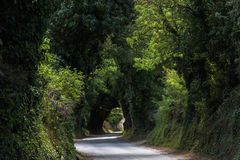 Road through green canopy Royalty Free Stock Photos