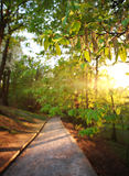 Road in green city park, lighted the rays of sunset Royalty Free Stock Photo