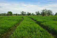 Road on  green field Royalty Free Stock Image