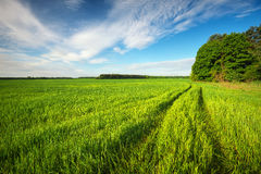 Road in green field and blue sky Royalty Free Stock Image