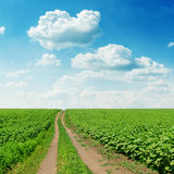 Road in green field and cloudy sky Royalty Free Stock Photography