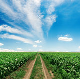 Road in green field and sky with clouds Royalty Free Stock Images