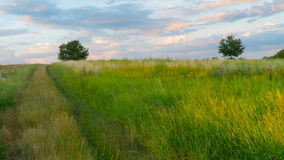 Road in green field at sunset.  Stock Photos