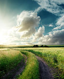 Road in green field and sunset. In clouds Royalty Free Stock Photo