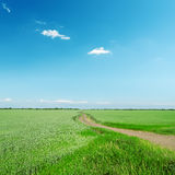 Road in green field under blue sky Stock Photography