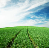 Road in green field Royalty Free Stock Photography