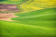 Road in the green field waves Royalty Free Stock Image