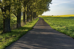 Road among green fields and blue sky, nature Stock Images