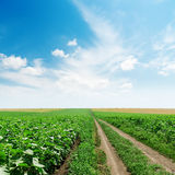 Road in green fields and clouds in blue sky Royalty Free Stock Photos