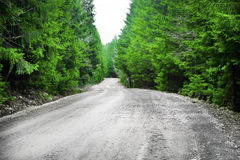 Road in the green fir tree forest Royalty Free Stock Photos
