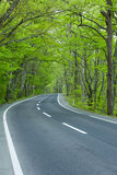 Road in a green forest Royalty Free Stock Photos