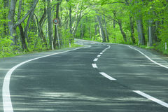 Road in a green forest Stock Photo