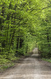 Road through green forest Stock Photos