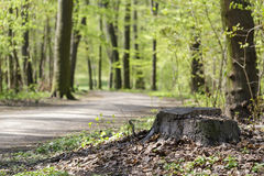 Road through green forest Stock Image
