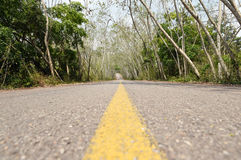 The road in green forest Stock Images