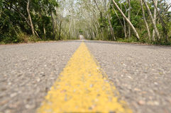 The road in green forest Stock Photography