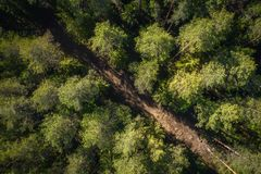 Road in green forest aerial view. Pine trees view from above stock photo