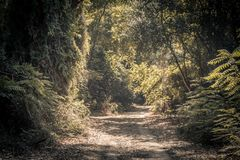 Road in a green forest. A close up of a road in a green forest with sunlight stock images