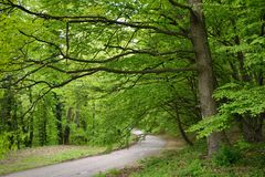 Road in Green Forest. Road in Forest with Early spring Green Trees Royalty Free Stock Images