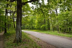 Road in Green Forest. Road in Forest with Early spring Green Trees Royalty Free Stock Photos