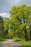 Road in Green Forest. Road in Forest with Early spring Green Trees Stock Photo