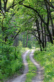 Road in green forest Stock Photos