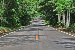 Road and green forest Royalty Free Stock Photography